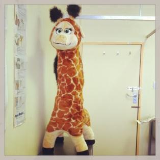 ortho giraffe