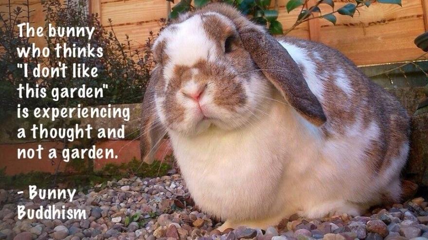 via @bunnybuddhism